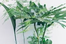 Plantes intérieur / flowers bunches