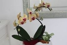 Special gifts. Modern design floral / Special gifts. Modern design floral: uniques flowers bouquets and Flower Pot Design