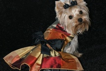 Yorkie evening-wedding dress and tutu