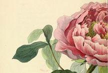 Art : Botanical // Botanique