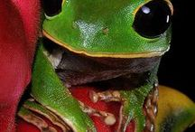 Amazing Frogs / So many colourful frogs in the world let us unite to save their habitat.