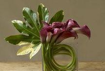 Floral arrangements  / by Tanya Adair