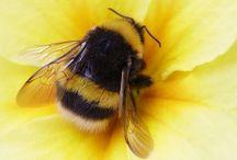 Bee & Flowers / Beesocial love the flowers!