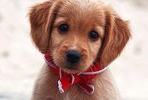 animaux tout mignon :)
