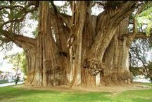 Trees / Trees are creations of such majestic beauty, if only they could talk!