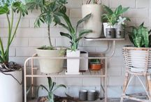 Plants / I want to learn to care for plants