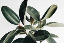plants / //