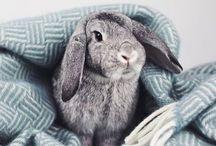 Bunny rabbit / #bunny #rabbitt #conejo