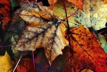FPP #Nature / Mother nature is beautiful. Photography, seasons and more