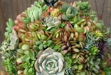 Garden Crafts & Ideas