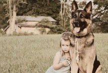 FPP #German #Shepherd / One day I shall own this lovely dog!
