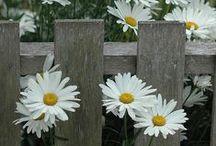 Adoro i fiori