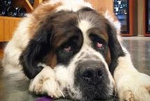 Dogs of France 44 / Our liquor store is very pet friendly. Here are some of our favorite customers who bring in their humans.