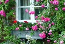 Jardins et fleurs / D'un beau jardin j'en rêve..... / by Monique Soler