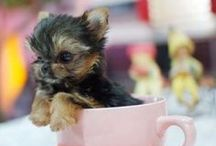 """Cuteness ♥ / """"Happiness is a warm puppy."""" ― Charles M. Schulz"""
