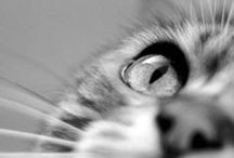 """Cats & Kittens / """"Time spent with cats is never wasted."""" – Sigmund Freud"""