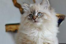 Cute & fluffy