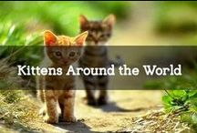 Kittens Around the World / Kittens & cats. These lovelies can be found everywhere in the world! Where will we find the cutest of our furry friends?
