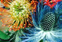 Flowers / Цветы, красота, flowers