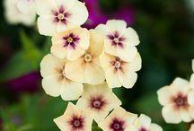 Flowers & Succulente