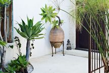 Green Gardens / Gorgeous plants, inside and out.