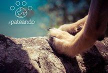 LOVE #PATEANDO // / #pateando