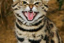 Felines / cats, felines, feline, cat