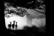 Amazing photography.