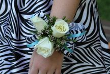 All About Zebra ♥