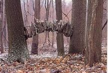 Artists - Andy Goldsworthy