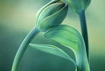 Flowers II / Fleurs
