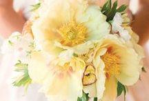 sweetest palate of lemon and rose / softest pastel hues