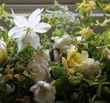 spring / fresh and blossomy mood board