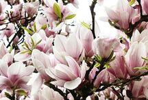 Kukat/Flowers