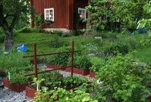 .trädgård.
