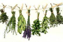 Κήπος & Φυτοθεραπεία