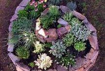 bylinky / herbs