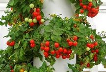 zeleninová zahrada / kitchen garden