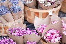 květinářství / flower shop