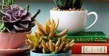 Suculentas&Plantas