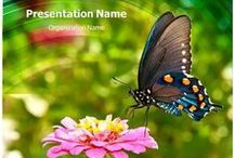Nature Powerpoint Templates / Our Professional Nature PowerPoint templates are perfect for a wide range of presentations ranging from environmental conservation to presentation.