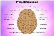 Brain PowerPoint Templates   Human Brain PowerPoint Template / Download Professionally-designed Brain PowerPoint Templates and Backgrounds. We have collections of brain ppt templates,3d animated brain powerpoint templates,human brain ppt templates and more.
