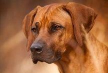 Animals  / Different dog breeds