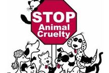Stop animal abuse / THE IDEA OF THIS IS TO EACH OFTHE PEOPLE WHO  ARE CRUEL TO THESE ANIMALS. PLEASE IF YOU SEE AN ANIMAL ABUSER REPORT IT. IF YOU SEE A PET ABANDONED PROTECT IT. LETS MAKE EVERY DAY A BETTER WORLD¡¡¡¡¡