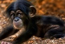 ~*Adorable Animals*~ / God's Beautiful Creatures! / by Diana Fisher