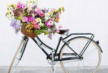 ~*Bicycle Beauties*~ / Old or new, you have to love bikes.  With flowers or not! / by Diana Fisher