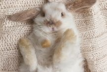 ~*Bunch of Bunnies*~ / I remember my first bunny, and when she passed, my son (Jeremy) was with me.  He helped me through that difficult time. BeBe was so precious! / by Diana Fisher