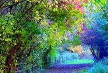Beautiful and wonderful things  / by Danielle Stinson