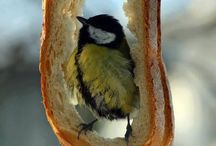 ~*Birdfeeders*~ / food for all, great or small, God's creatures share it all... / by Diana Fisher