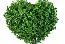 Wszystko co zielone :-)